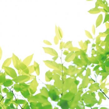 【新緑プラン】若葉と門出